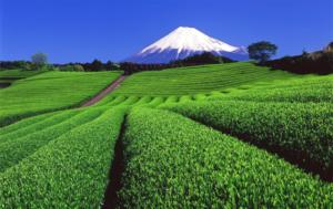 japanese_green_tea